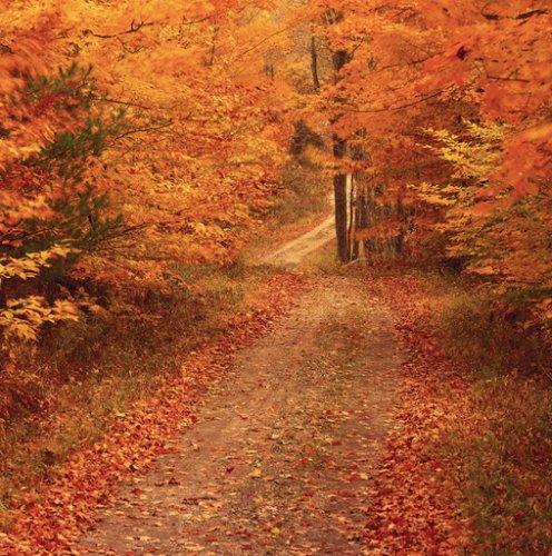 Фотообои осень на рабочий стол